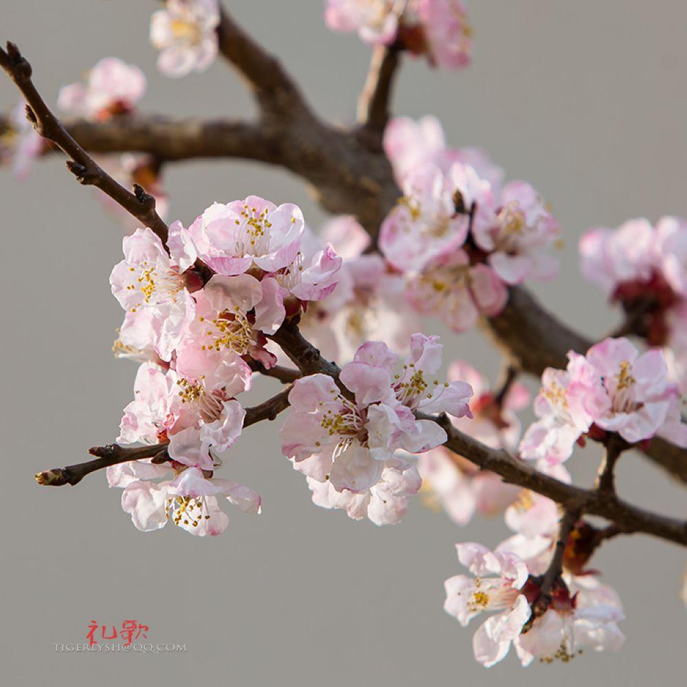 春天来了 - 摄影作品
